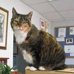 Dizzy of Cheshire Cat Clinic, the premier provider of feline-exclusive veterinary care in San Diego, California