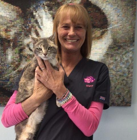 Marta of Cheshire Cat Feline Health Center, San Diego's #1 Feline only hospital