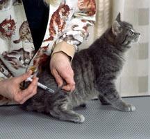 Feline Vaccination, Cheshire Cat Feline Health Center